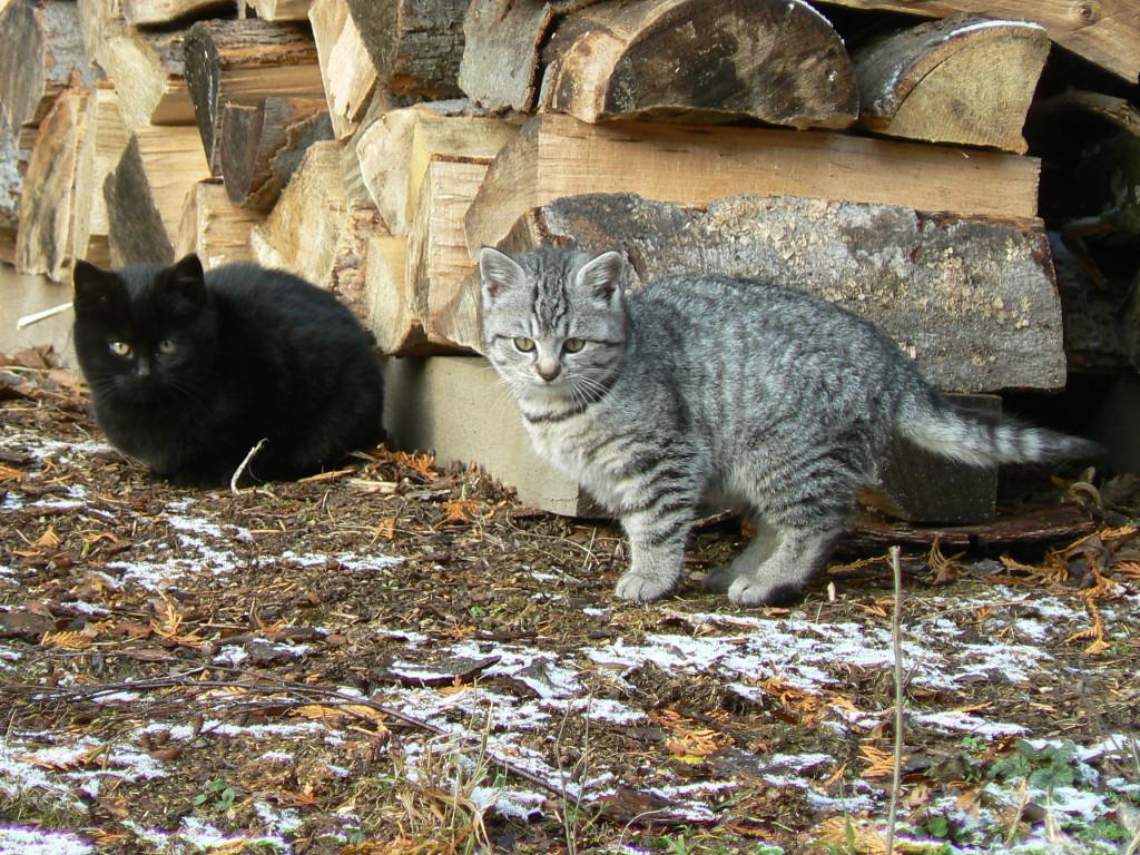 Kočičáci